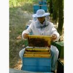 Продаю пчелосемьи, пчеломатки, пчелопакеты карпатской породы
