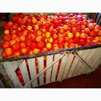 Продам яблука, груші з власного саду