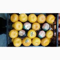 Продам мандарин оптом