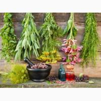 Лекарственные травы (3)