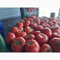 Продаём помидоры сорт высокого из Турции