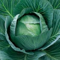 Професійне насіння капусти для тривалого зберігання