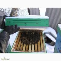 Продам бессотовые пчелопкеты