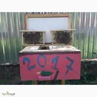 Матка Карпатка 2018 ПЛІДНІ БДЖОЛОМАТКИ Пчеломатки, Бджоломатки, Бджолині матки