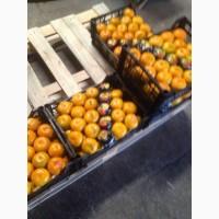 Продам апельсин и мандарин оптом