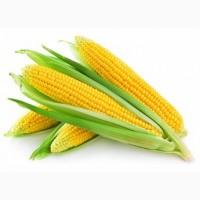 Насіння кукурудзи Онікс