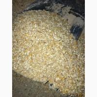 Закупаем кукурузу неклассную с повышенной зерновой примесью