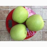 Продам яблоко дельбар урожай 2018 г