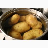 Распродажа!!! Чернигов, поставка картофеля на экспорт, опт