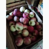 Господарство реалізує яблука осінніх та зимових сортів