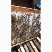 Пчелосемьи, пчелопакеты пчелы (Дадан, Рута) 2019 Луганск