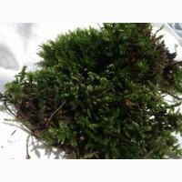 Продам мох свежий(сухой) сфагнум та кукушкін лён