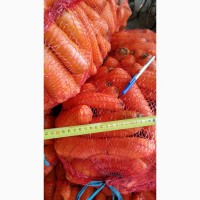 Продажа оптом моркови мытой 2 сорт