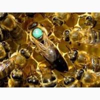 Продаю 4 повноцінні бджолосім#039;ї, 1 бджолопакет