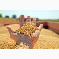 Закупаем сою ГМО