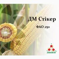 Семена кукурузы ДМ Стикер, ФАО 250