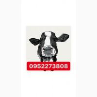 Закупа на мясо быков