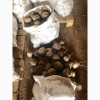 Продам крупная свекла 10-15 см сорт Комаро