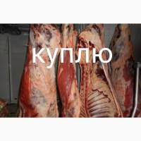 Закупаем говядину живым весом или мясом