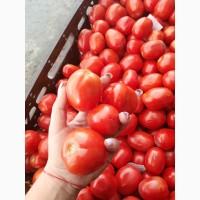 Продам помидор на бюджет