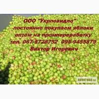 Куплю яблоки оптом на промпереработку