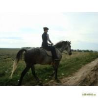 Продам лошадь(мерина серого в яблоках)