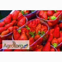 Пластиковая пинетка для ягод вместимость 0, 5 кг