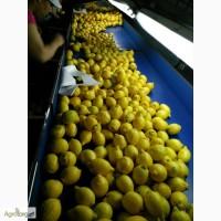 Лимон с Испании