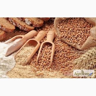 Продам крупу пшеничную