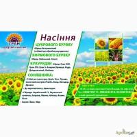 Продам насіння соняшника Сонячний настрій, гранстаростійкий