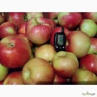 Плодоносящий яблоневый сад в Крыму (Свидетельство, документы готовы)