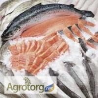 Рыба оптом: сельдь, скумбрия, салака, хек, хребты лосося, минтай и пр