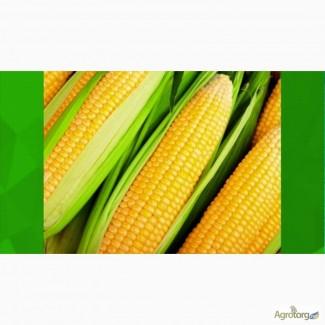 Семена кукурузы отечественные производители