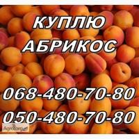 Куплю абрикос оптом, (не порченную) на заморозку и сушку. Харьков и соседние области