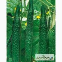 Продам семена Огурец китайский Зелёный дракон F1