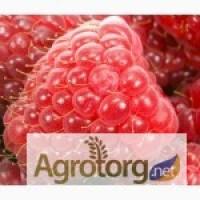 Закупаем ягоды:малину у населения цена приемлемая
