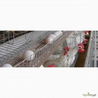 Лента яйцесбора ЛТ-100 ЛТ-250 ЛТ-300