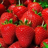 Фермерське господарство реалізує свіжі ягоди клубники