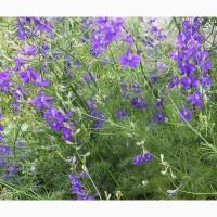 Живокость полевая трава (Сокирки) 50 грамм