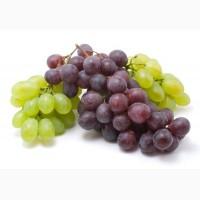 Оптом виноград
