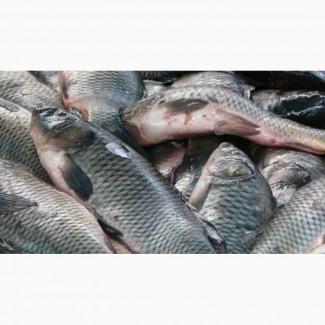 Купим рыбу без посредников