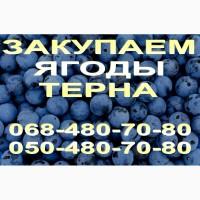 Куплю ягоды терна (терн, терен) оптом от 1 тонны