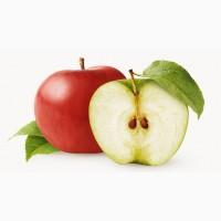 Підприємство закуповує яблука на переробку по всій Україні