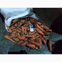 Продам Херсонскую морковь