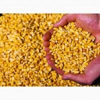Реализуем кукурузу расфасовано в мешках по 50 кг