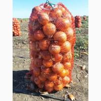Продам 100 тонн лука Репчатый, фото реальные Херсонская обл Каховка
