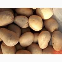 Продажа картофеля товарного оптом в Харькове