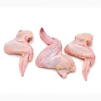 Крыло куриное охлажденное / ХОРЕКА ( Рестораны / Кафе / Кейтеренг / ФастФуд )