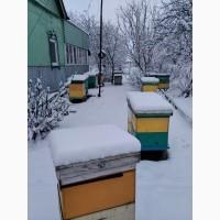Продам бджоломатки карніка