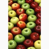 Закупаем яблоки оптом
